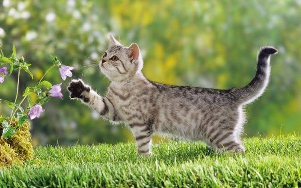 رؤية القطط في المنام